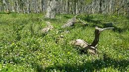 zieleń w lesie