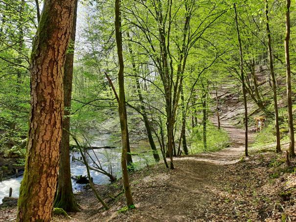 Drzewa, bystra rzeka, ścieżka turystyczna, młode liście drzew przez które przebija się słońce.