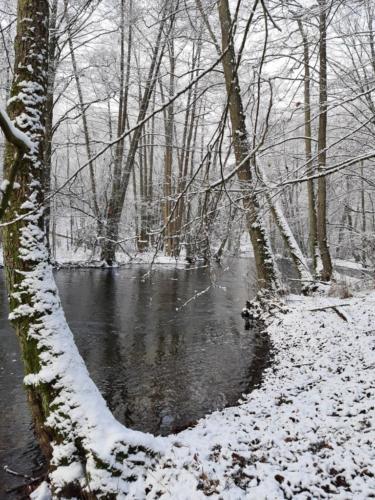 zima, rzeka, drzewa wygięte na brzegu, autor zdjęcia: Joanna Osińska