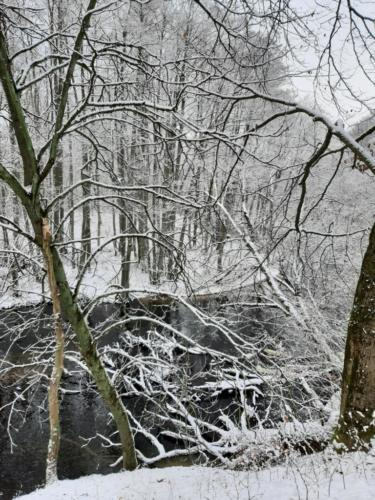 zima, drzewa, rzeka, autor zdjęcia: Joanna Osińska